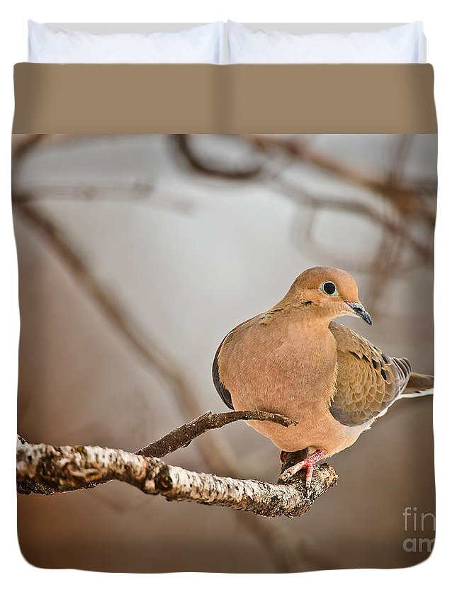 Mourning Dove Duvet Cover featuring the photograph Mourning Dove Pictures 71 by World Wildlife Photography