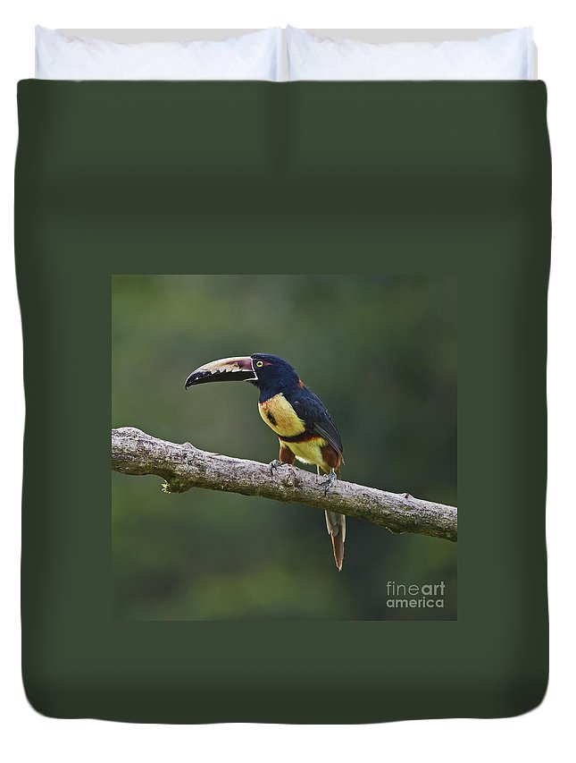Collared Aracari Duvet Cover featuring the photograph Mr. Colorful.. by Nina Stavlund