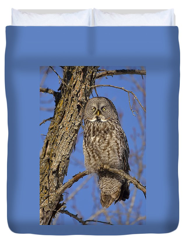 Great Grey Owl Duvet Cover featuring the photograph Mr. Gray by Joshua McCullough