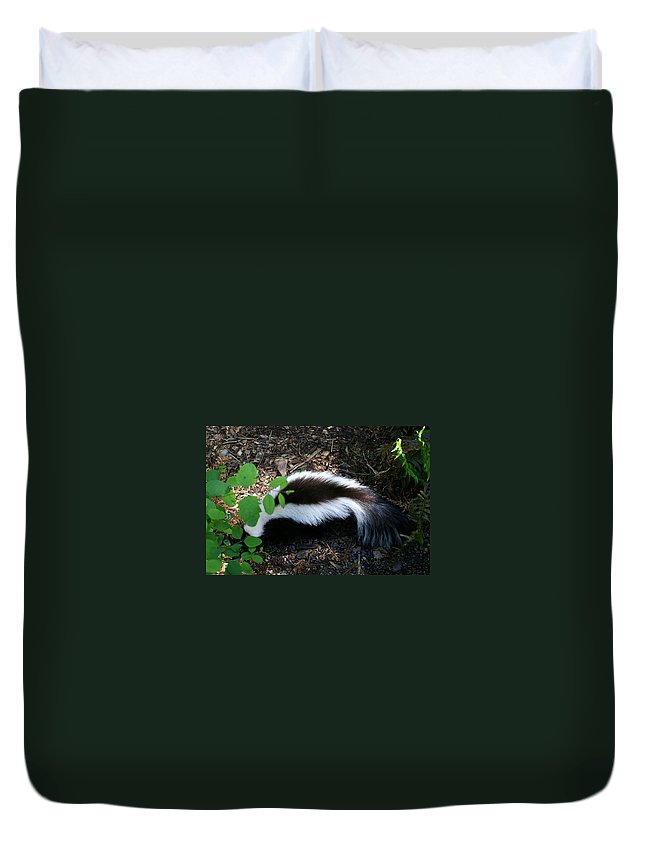 Skunk Duvet Cover featuring the photograph Mr Stinky by Jeff Swan