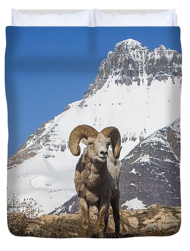 Mt Wilbur Duvet Cover featuring the photograph Mt Wilbur Big Horn by Jack Bell