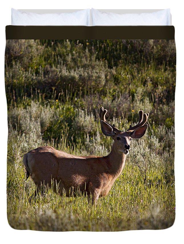Deer Duvet Cover featuring the photograph Mule Deer In Velvet  #2114 by J L Woody Wooden
