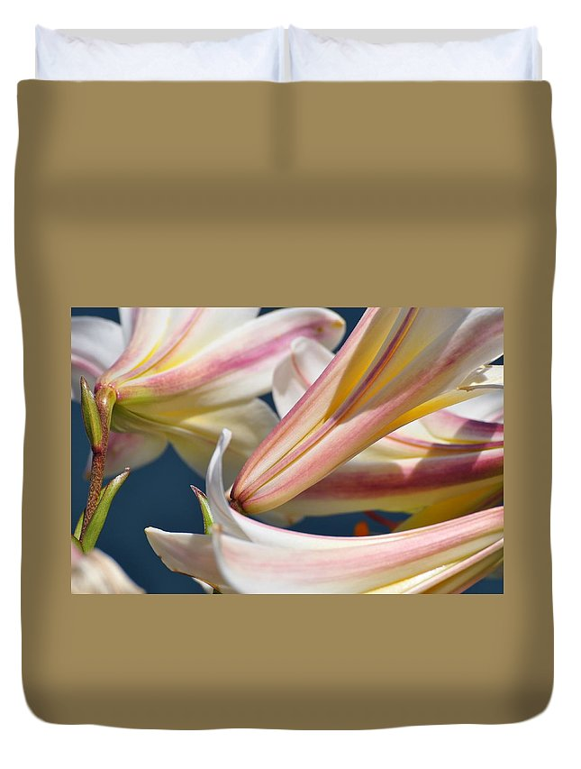 Lily Duvet Cover featuring the photograph Multi-hued Lilies by Gregory Strong