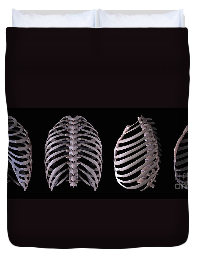 Anatomical Model Duvet Cover featuring the photograph Multiple View Of The Rib Cage by Science Picture Co