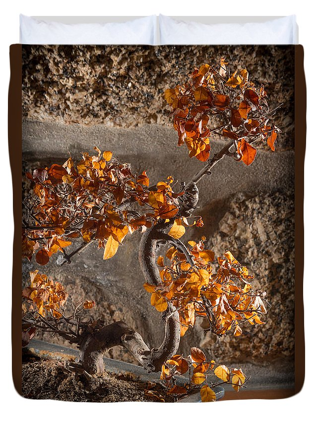 Bonsai Duvet Cover featuring the photograph Mummified Bonsai by Ernesto Santos