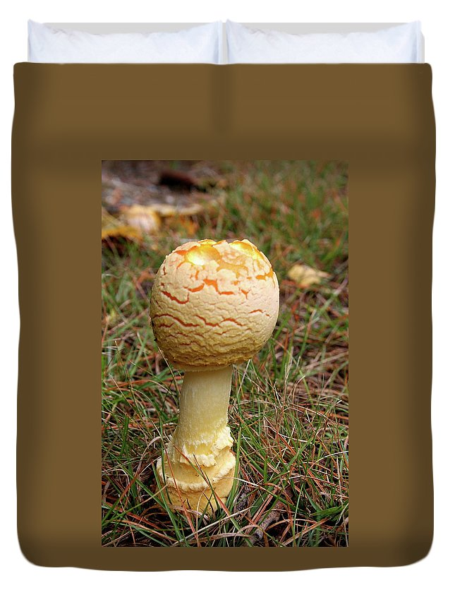 Mushroom Duvet Cover featuring the photograph Mushroom by Christiane Schulze Art And Photography