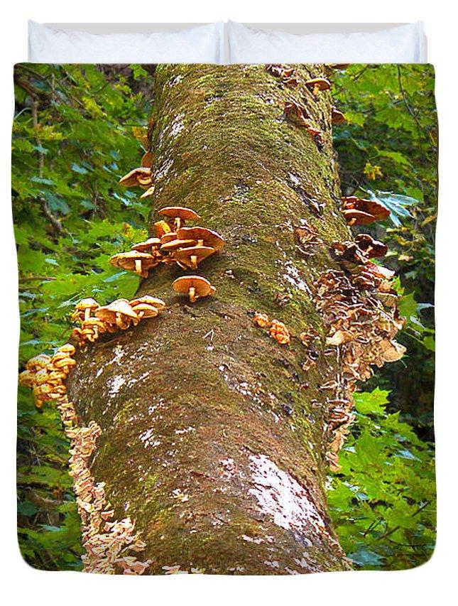 Tree Duvet Cover featuring the photograph Mushroom's Kingdom by Milena Ilieva
