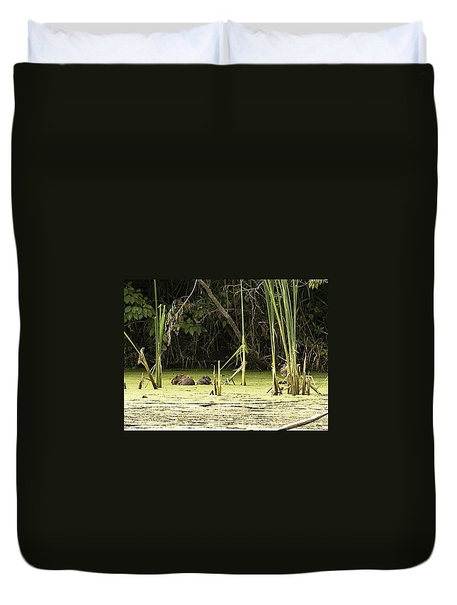 Heron Heaven Duvet Cover featuring the photograph Muskrat Family by Edward Peterson