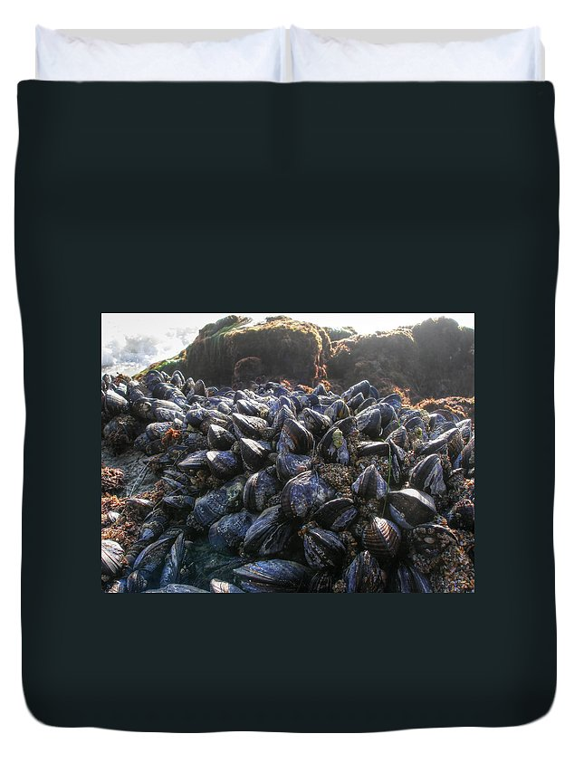 Mussels; Mussel; Beach; Marine Life; Rocks; Rock Duvet Cover featuring the photograph Mussels On A Rock by Diego Re