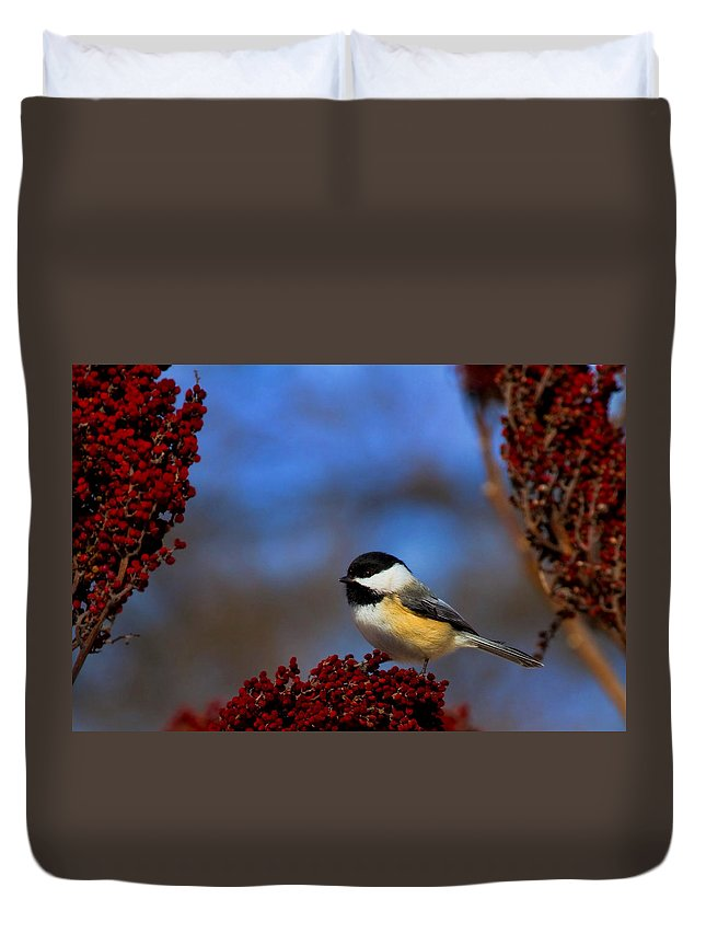 Bird Duvet Cover featuring the photograph My Little Chicadee by John Absher
