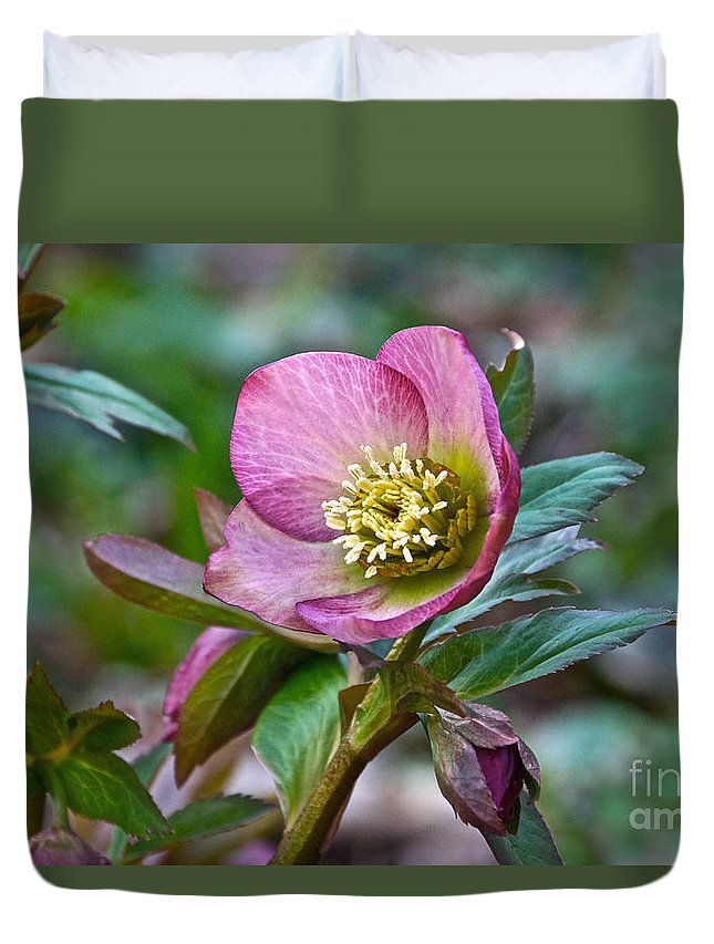 Christmas Rose Duvet Cover featuring the photograph My Wild Xmas Rose by Byron Varvarigos