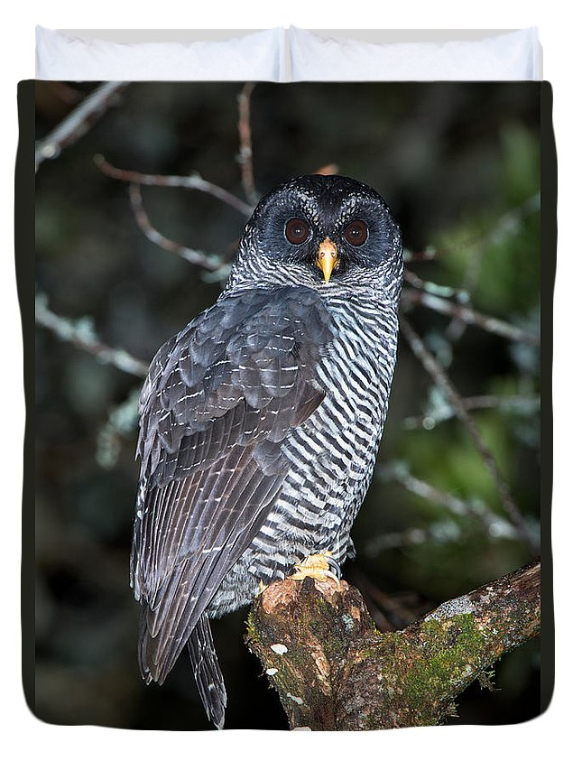 San Isidro Owl Duvet Cover featuring the photograph Mysterious Owl by Anthony Mercieca