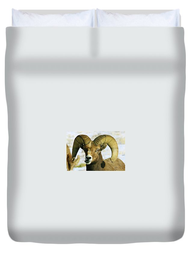 Bighorn Sheep Duvet Cover featuring the photograph Na Na Nanny Poo by Jeff Swan