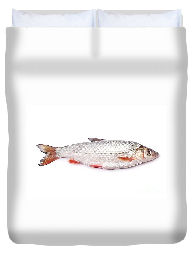 Animal Duvet Cover featuring the photograph Nase Fish by Cristian M Vela