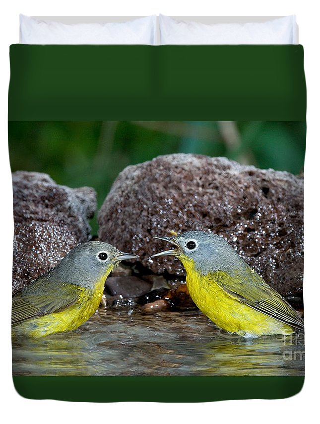 Fauna Duvet Cover featuring the photograph Nashville Warblers Vermivora Ruficapilla by Anthony Mercieca