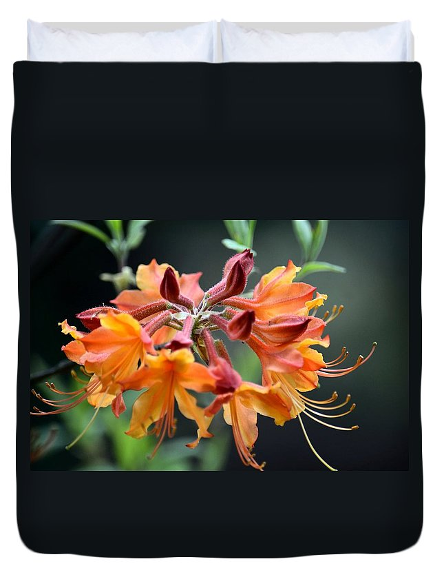 Native Flame Azalea I Duvet Cover featuring the photograph Native Flame Azalea I by Maria Urso