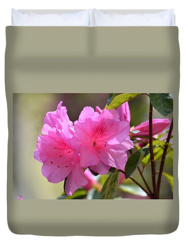 Native Roseshell Azalea Duvet Cover featuring the photograph Native Roseshell Azalea by Maria Urso