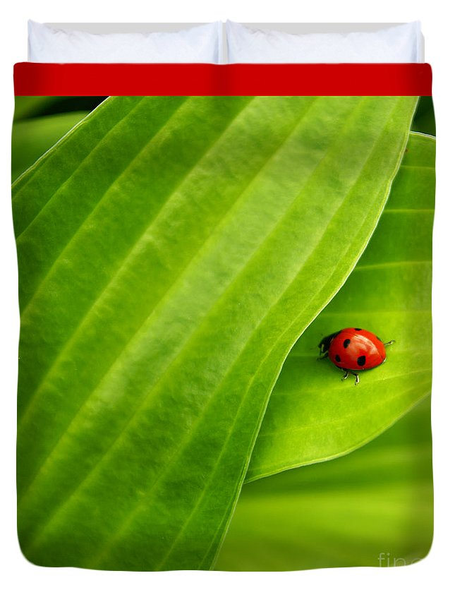 Ladybug Duvet Cover featuring the photograph Naturellement Complementaire by Aimelle