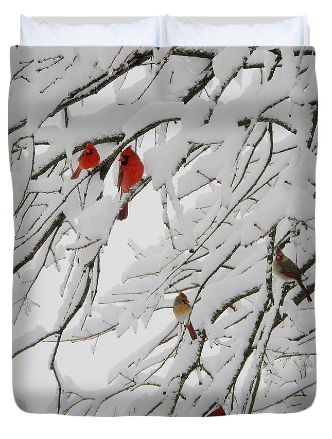 Red Birds Duvet Cover featuring the photograph Nature's Christmas Ornaments by Shannon Story