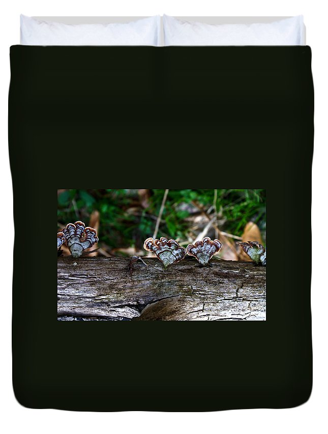 Bracket Duvet Cover featuring the photograph Natures Fantasy Fans by Douglas Barnett