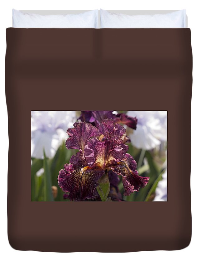 Iris Duvet Cover featuring the photograph Nature's Ruffles by Nicole Colella
