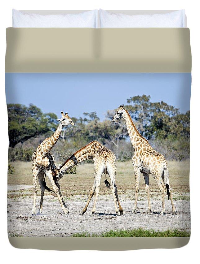 Giraffe Duvet Cover featuring the photograph Necking Giraffes Botswana by Liz Leyden