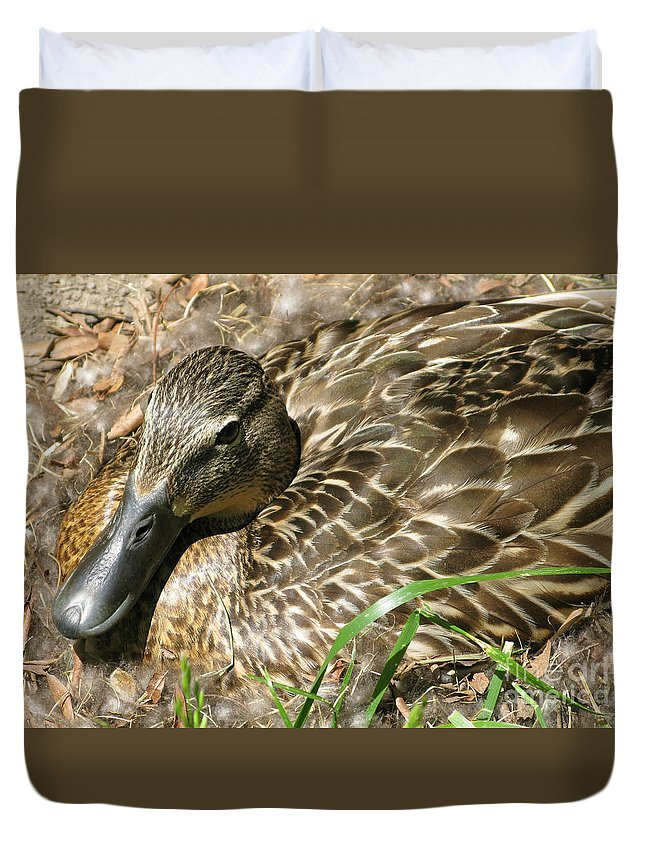 Mallard Duvet Cover featuring the photograph Nesting Mallard by Ann Horn