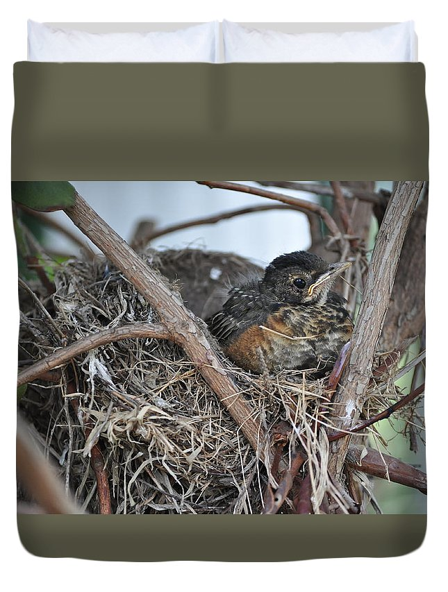 Bird Nest Duvet Cover featuring the photograph Nesting by Rebecca Jayne