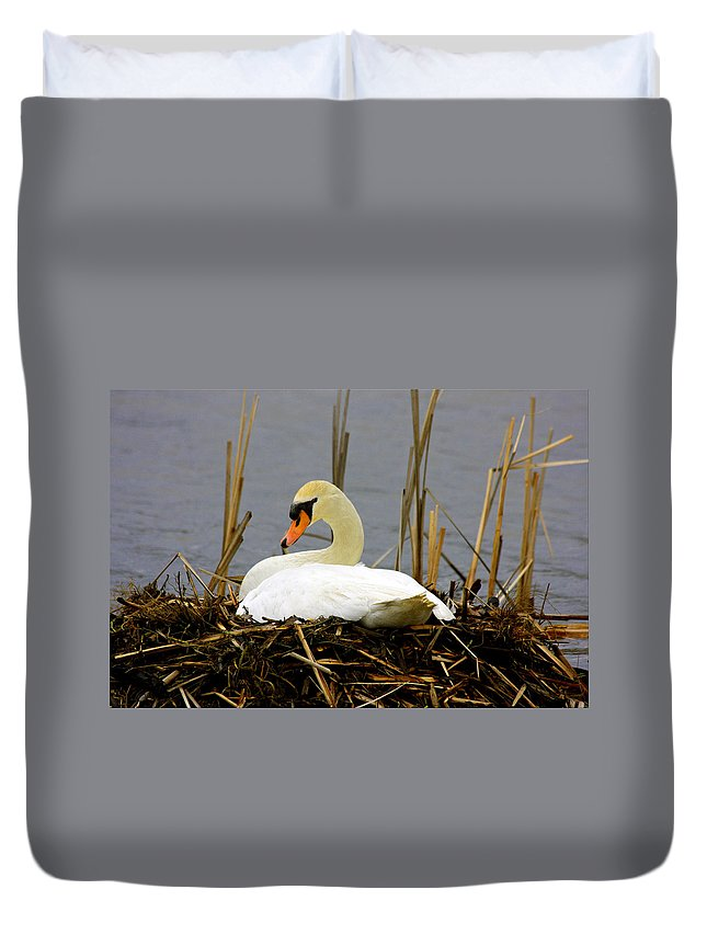 Swans Art Prints Duvet Cover featuring the photograph Nesting Swan by Marie Jamieson