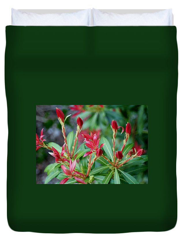 Flowers Duvet Cover featuring the photograph New Growth by Barbara S Nickerson
