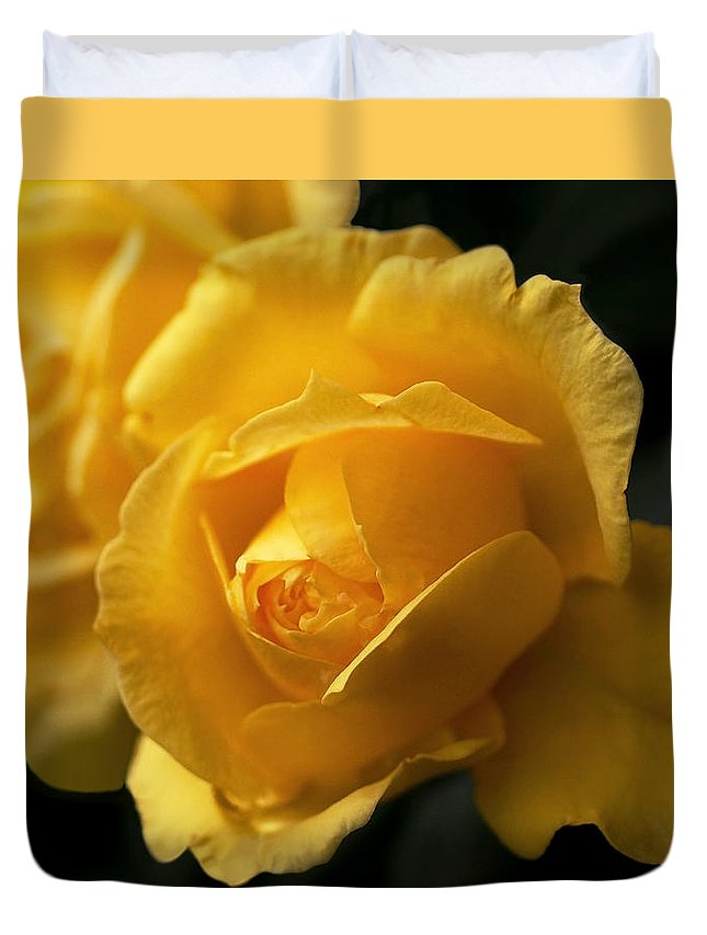 Yellow Duvet Cover featuring the photograph New Yellow Rose by Rona Black