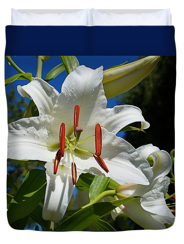 Asian Lily Duvet Cover featuring the photograph Newly Opened Lily by Nick Kloepping