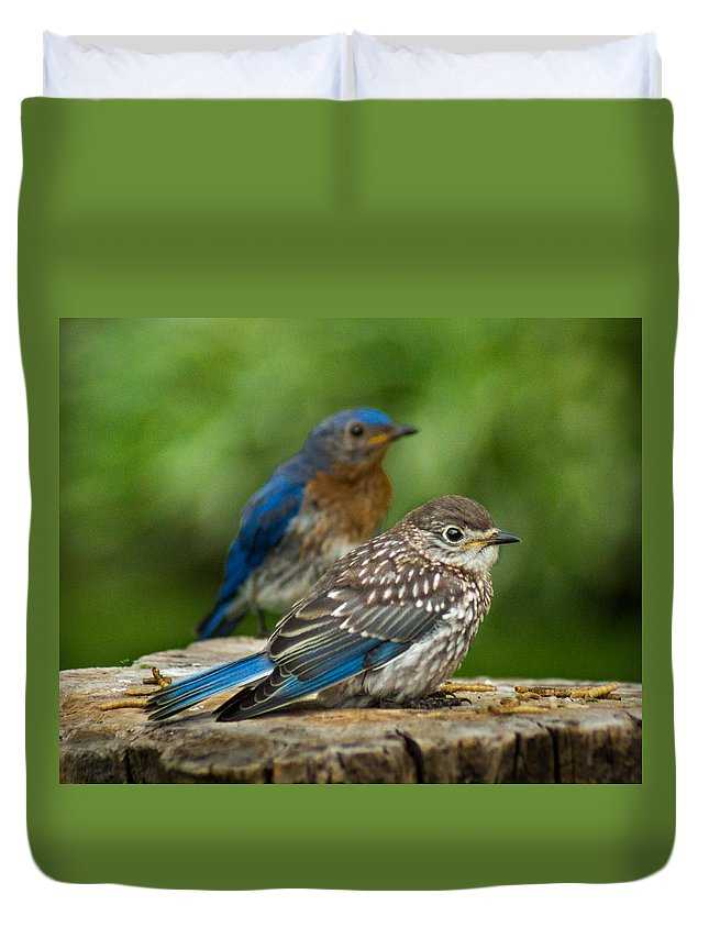 Bird Duvet Cover featuring the photograph Next Generation by Bill Pevlor