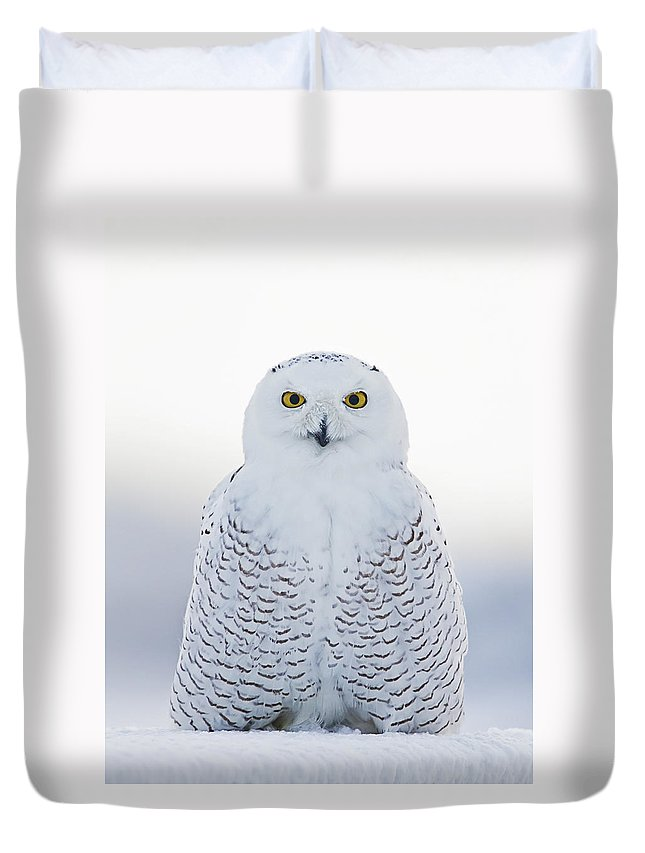 Snowy Owl Duvet Cover featuring the photograph Nh Seacoast Snowy Owl by John Vose