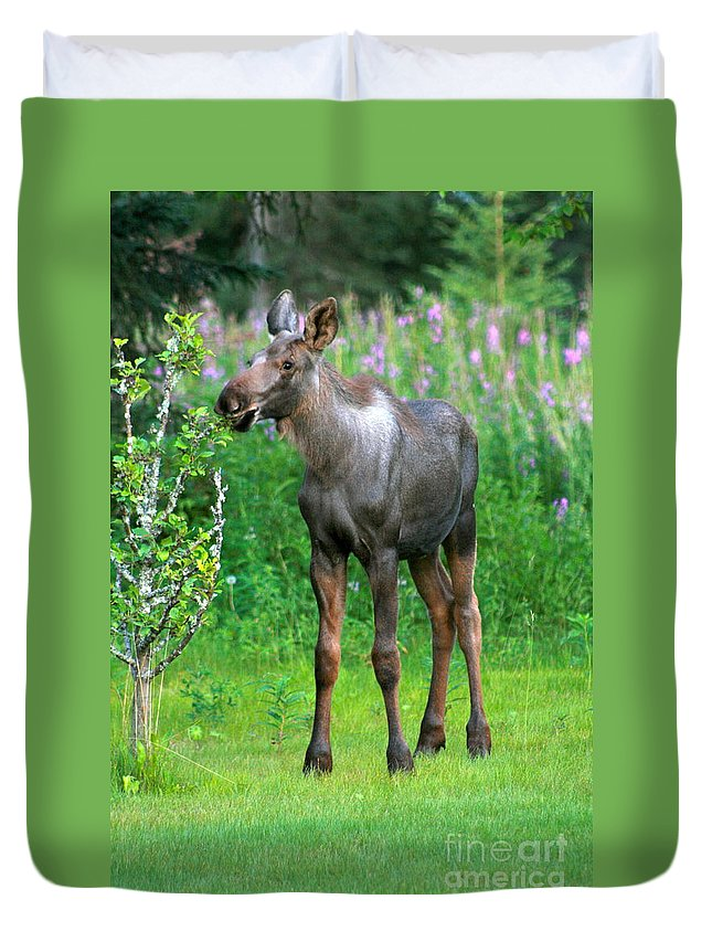 Moose Duvet Cover featuring the photograph Nibbler by Rick Monyahan