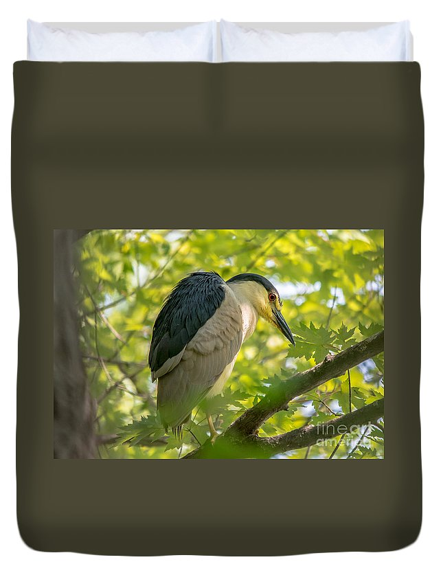Tree Duvet Cover featuring the photograph Night Heron At Rest by Cheryl Baxter