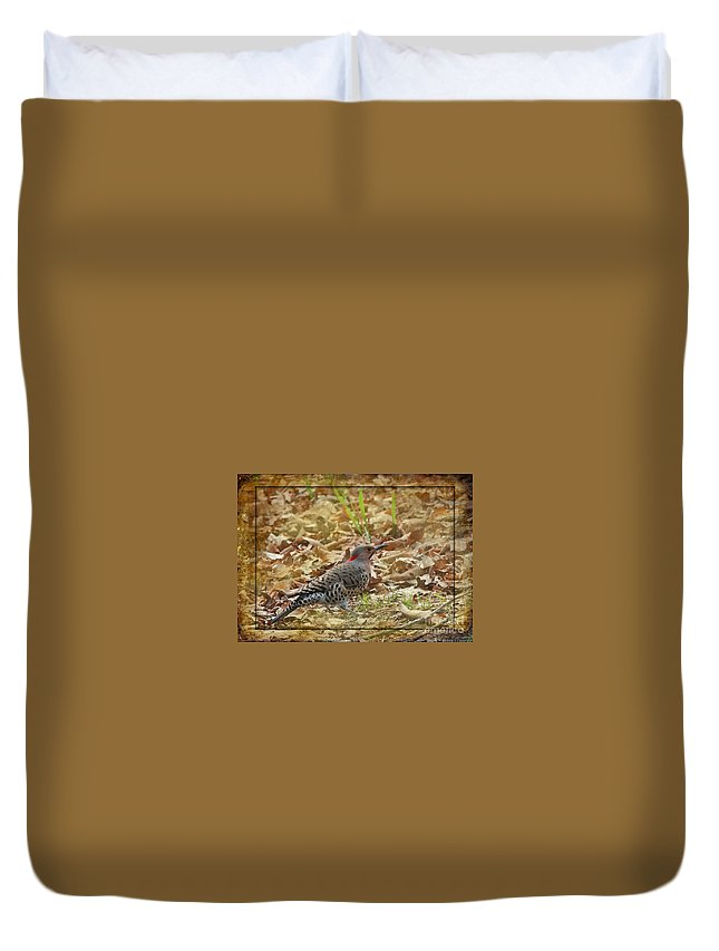Nature Duvet Cover featuring the photograph Northern Flicker Woodpecker by Debbie Portwood
