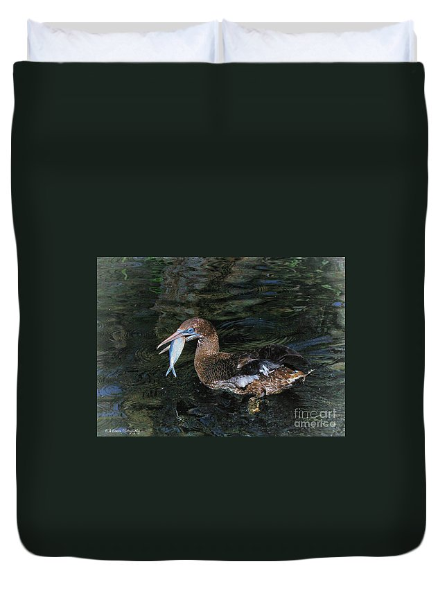 Northern Gannet Duvet Cover featuring the photograph Northern Gannet Feeding by Barbara Bowen