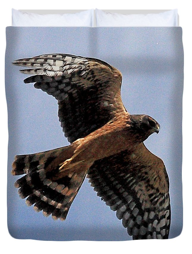 Nature Duvet Cover featuring the photograph Northern Harrier by Stephanie Salter