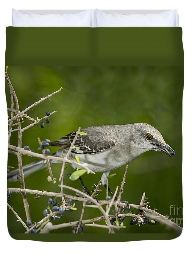 Northern Mockingbird Duvet Cover featuring the photograph Northern Mockingbird by Anthony Mercieca