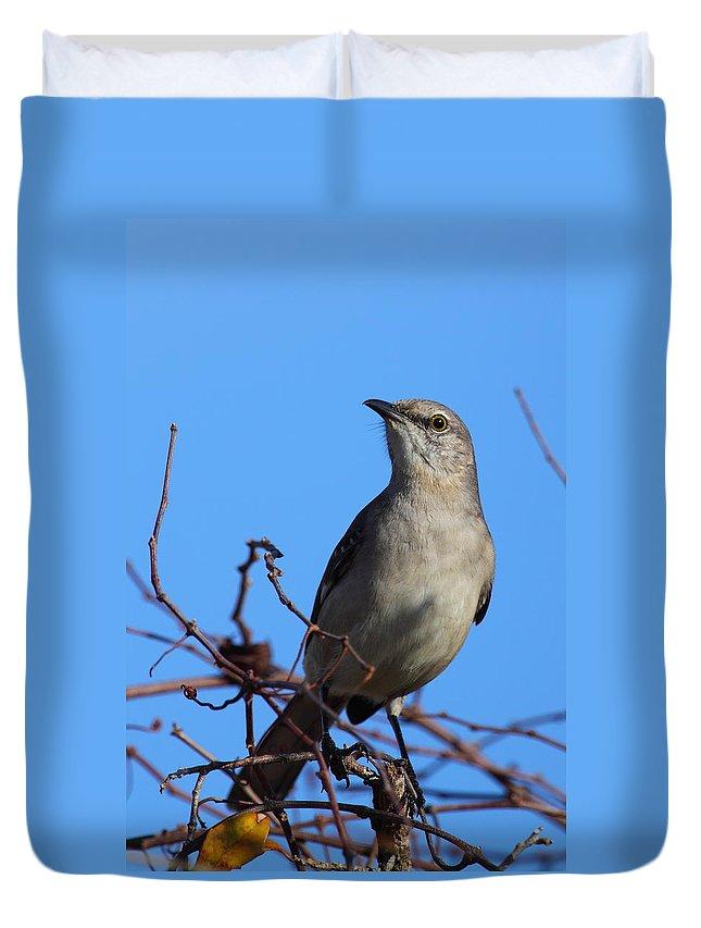 Mockingbird Duvet Cover featuring the photograph Northern Mockingbird IIi by Bruce J Robinson