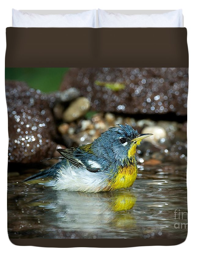 Fauna Duvet Cover featuring the photograph Northern Parula Parula Americana Soaking by Anthony Mercieca