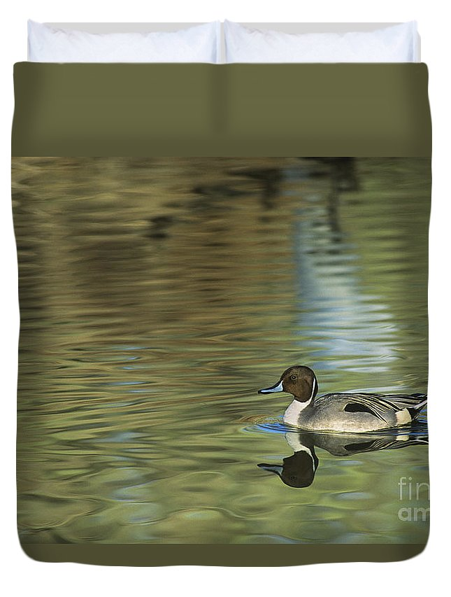 North America Duvet Cover featuring the photograph Northern Pintail In A Quiet Pond California Wildlife by Dave Welling