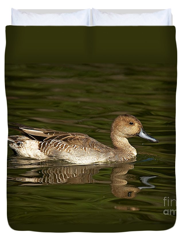Pintail Duvet Cover featuring the photograph Northern Pintail Molting by Anthony Mercieca