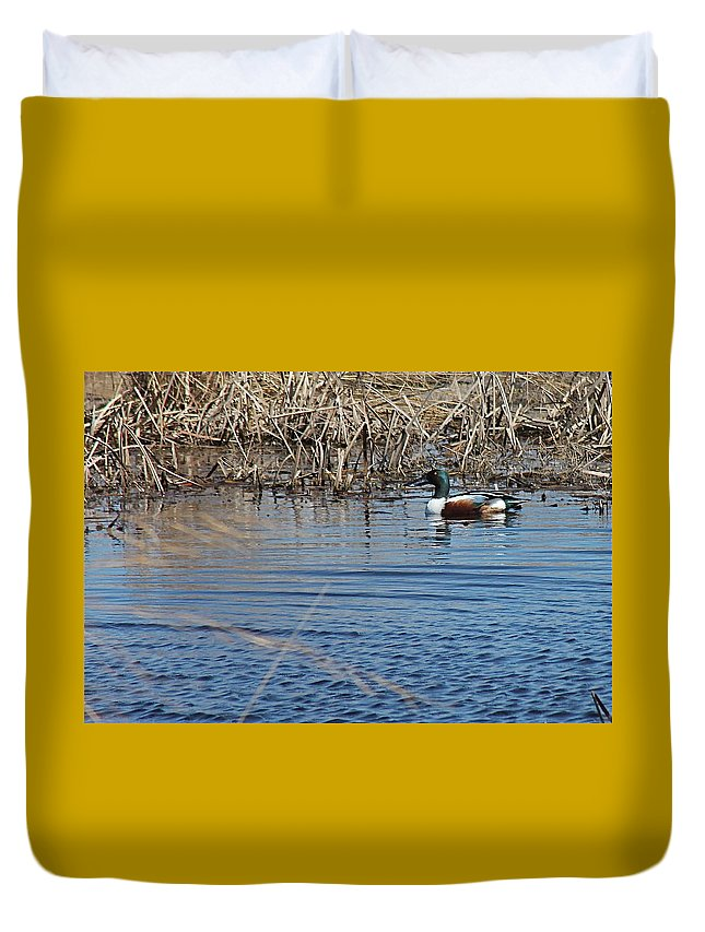 Birds Duvet Cover featuring the photograph Northern Shoveler Swim by Wayne Williams