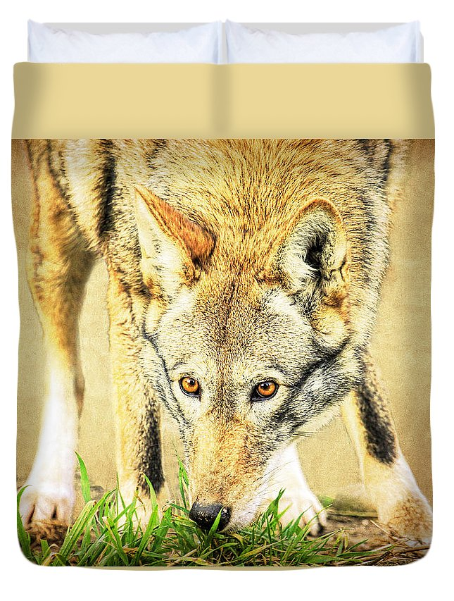 Wolf Duvet Cover featuring the photograph Nose In The Grass by Steve McKinzie
