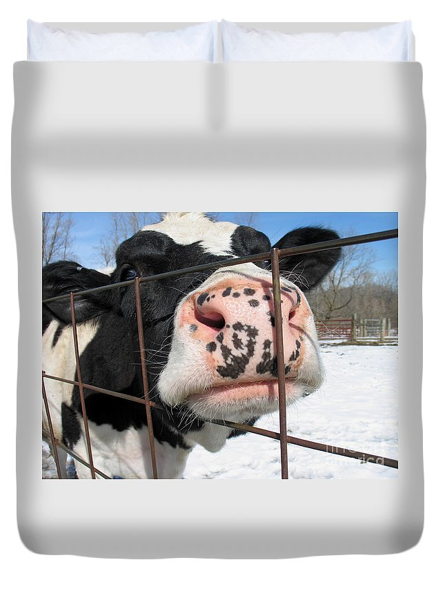 Cow Duvet Cover featuring the photograph Nosy by Ann Horn