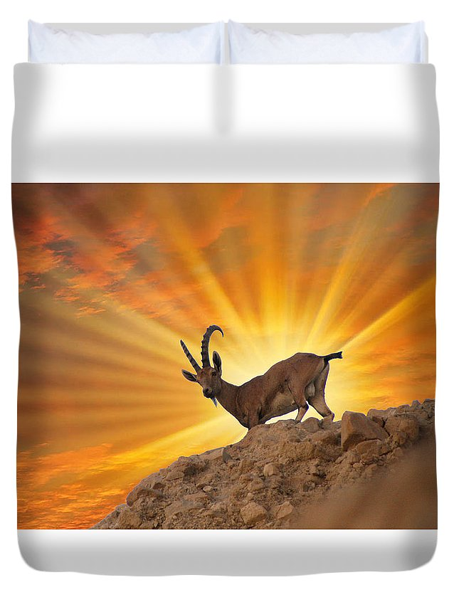 Nubian Ibex Duvet Cover featuring the photograph Nubian Ibex by Doc Braham