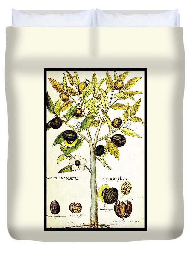 Nutmeg Duvet Cover featuring the drawing Nutmeg Plant Botanical by Rose Santuci-Sofranko