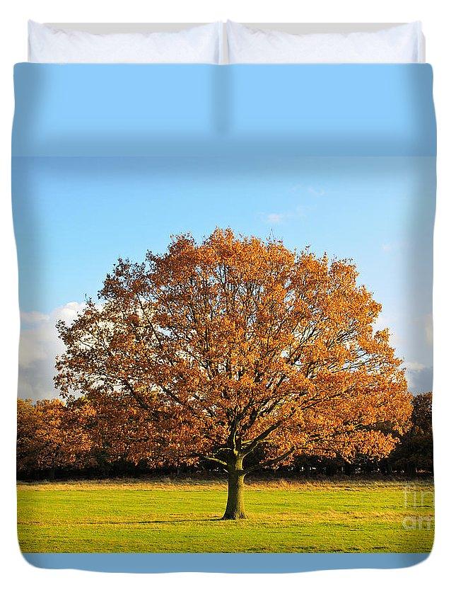 Oak Duvet Cover featuring the photograph Oak Tree by Lana Enderle